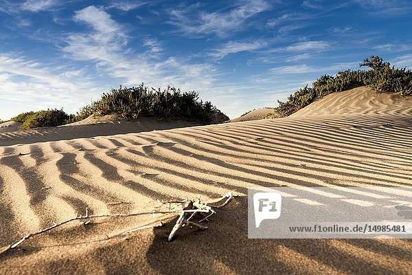 Features sand dunes of the bay. Famara  Lanzarote. Spain.