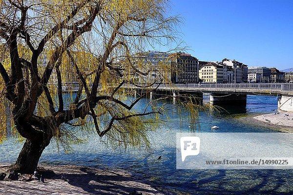 Pont de la Machine seen from L'île Rousseau -Rousseau island  Rhone river  Geneva  Switzerland  Europe