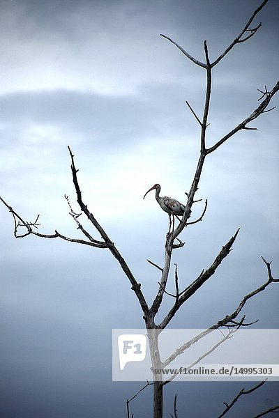 A bird perchs on a tree branch in Yucatan  Mexico  June 21  2009.
