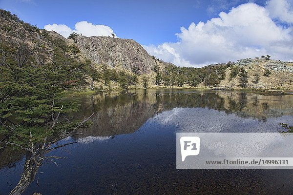 Reflections on the Lagunas Altas trail  Patagonia National Park  Aysen  Patagonia  Chile.