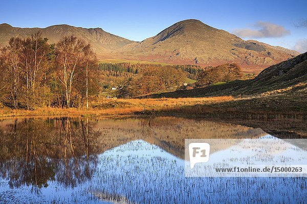 Kelly Hall Tarn near Torver in the Lake District National Park with the Old Man of Coniston in the distance.