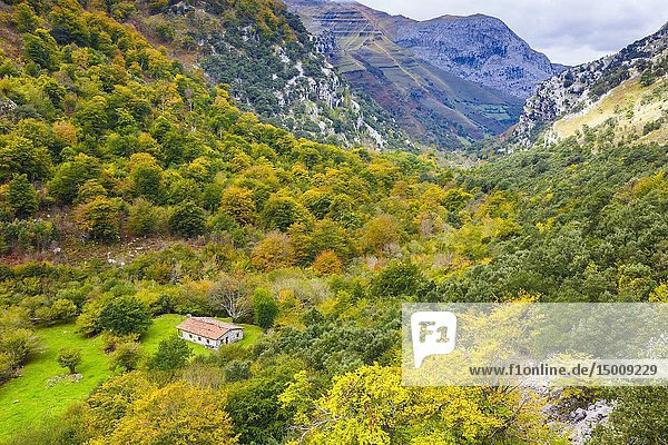 Beech forest landscape in autumn. Collados del Ason Natural Park. Cantabria  Spain  Europe.