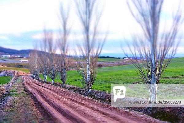Rural landscape. Villamayor de Monjardin. Navarre  Spain  Europe.