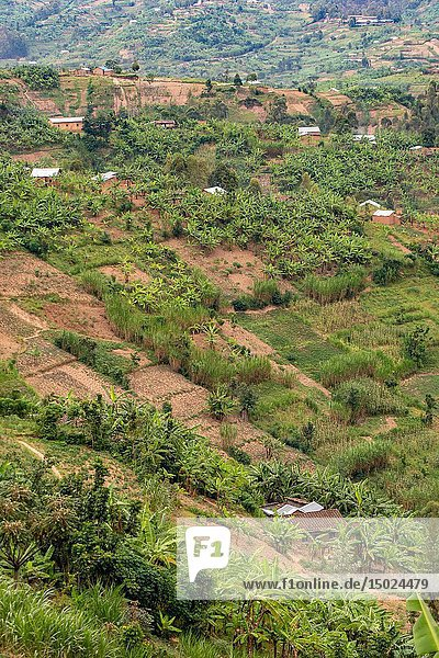 Hilly countryside dotted with plots of farmland  Rwanda.