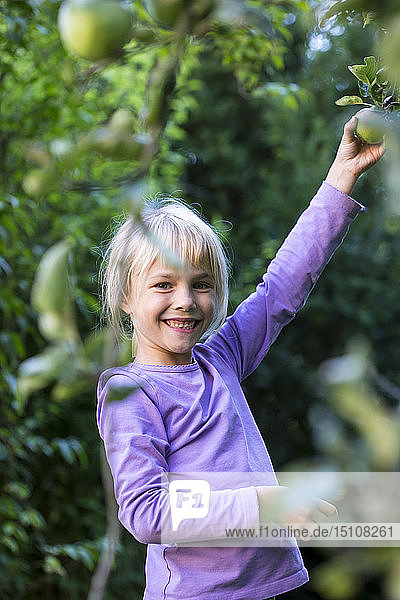 Portrait of happy little girl picking apple from tree