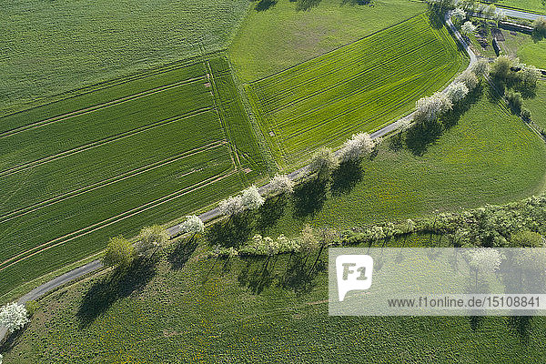 Aerial view of rural road with white blossoming trees and agricultural fields  Franconia  Bavaria  Germany