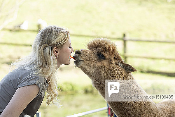 Woman feeding alpaca from mouth to mouth
