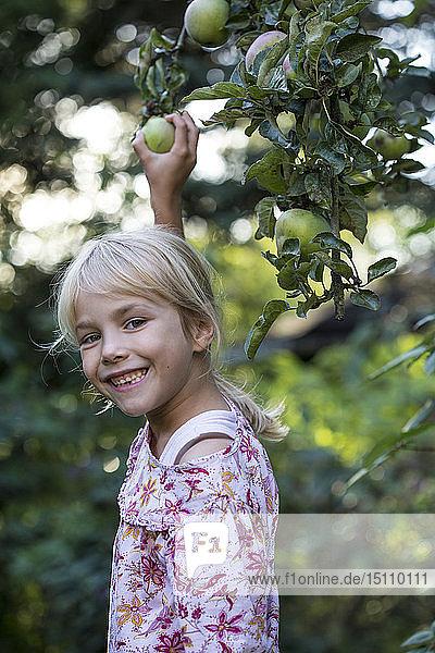 Porträt eines lachenden Mädchens beim Apfelpflücken vom Baum