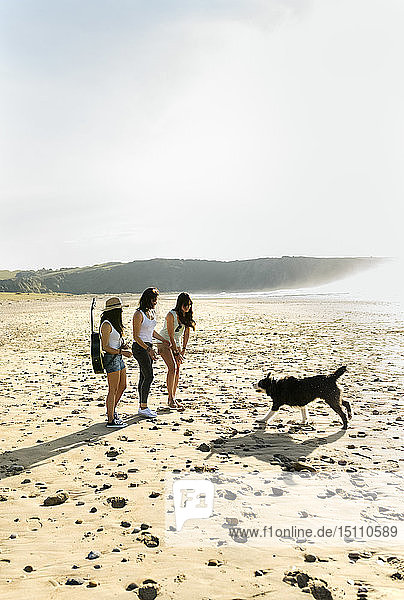 Three women with dog and guitar on the beach