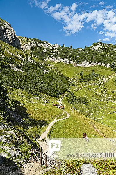 Österreich  Tirol  Maurach  Rofangebirge  Weidepferde