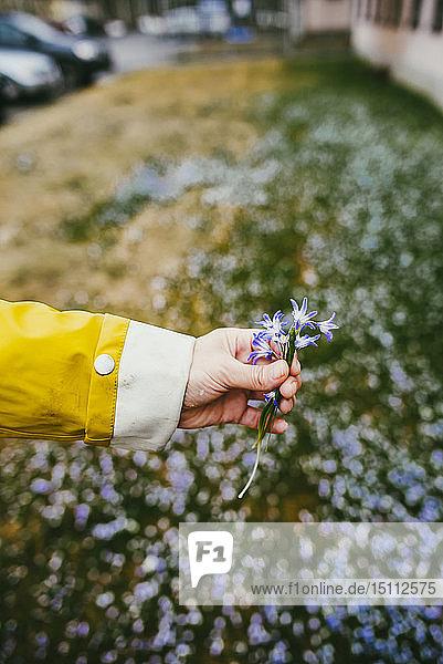Nahaufnahme einer Frau  die Blumen von einer Wiese pflückt