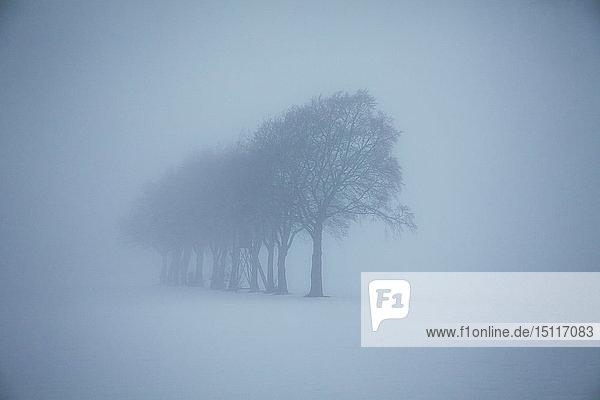 Verschwommene Winterlandschaft mit Baumreihen und Hochsitz