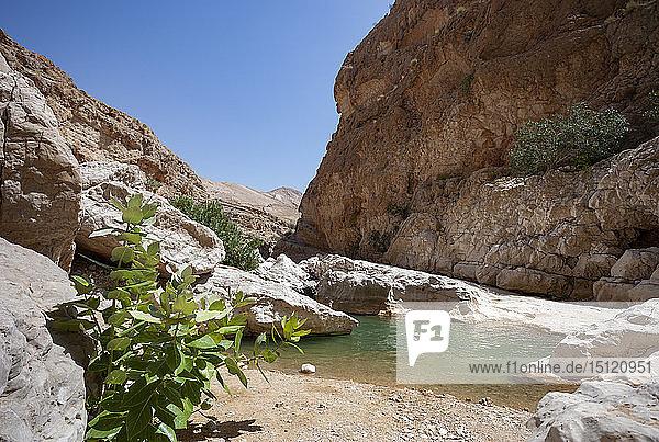 Mann schwimmt in einem kleinen See im Wadi Bani Khalid  Oman