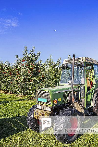 Schweiz  Thurgau  Apfelernte