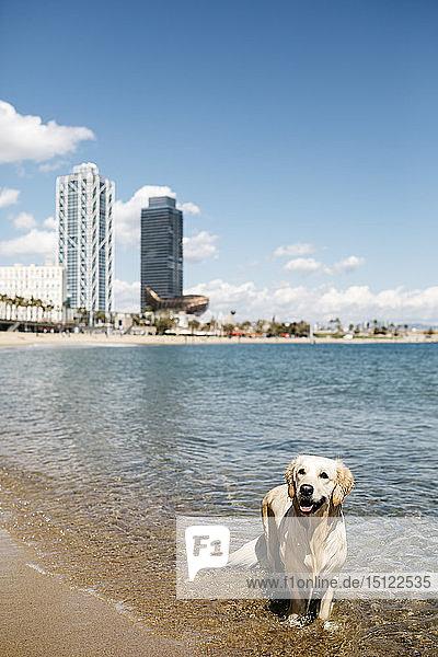 Spanien  Barcelona  Porträt von nass