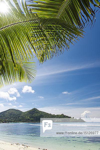 The sun shining through palm leaves at Baie Lazar  Mahe  Seychelles  Indian Ocean  Africa
