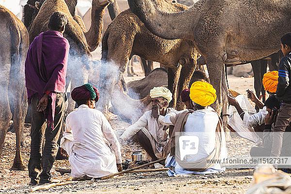 Camel herders at the Pushkar Camel Fair  Pushkar  Rajasthan  India  Asia