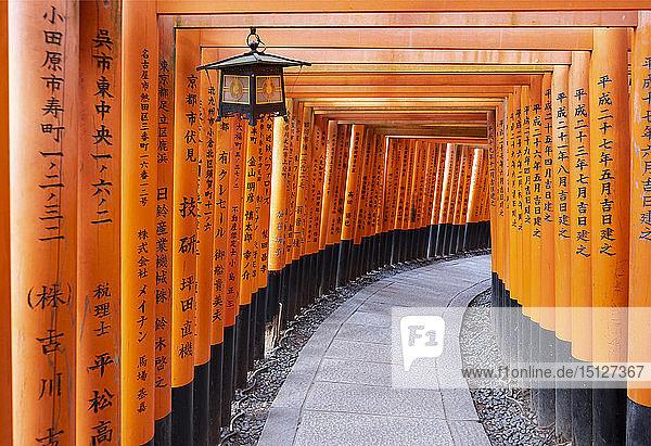 Red Gates at the Fushimi Inari Taisha  a Shinto shrine on Mount Inari  Kyoto  Arashiyama  Japan  Asia