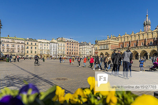 The main square  Rynek Glowny  in the medieval old town Krakow  a UNESCO World Heritage site  in Krakow  Poland  Europe.