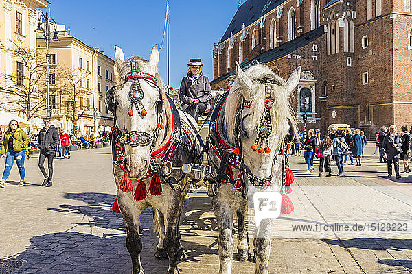 Horse drawn carriage in the main square  Rynek Glowny  in the medieval old town  UNESCO World site  in Krakow  Poland  Europe.