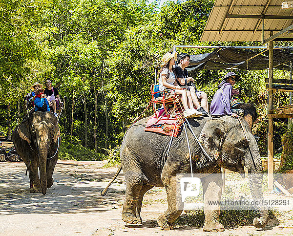 Tourists on an elephant ride in Phuket  Thailand  Southeast Asia  Asia