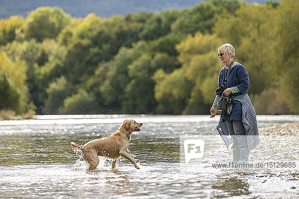 A woman plays with her Golden Retriever dog in the River Wye river on a sunny day  Powys  Wales  United Kingdom  Europe