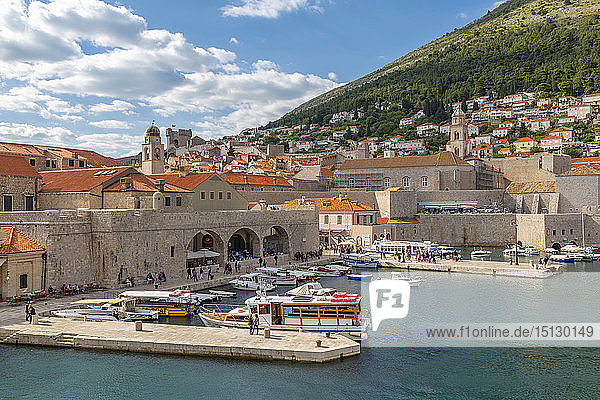 View of boats in harbour of Dubrovnik Old Town from the wall  UNESCO World Heritage Site  Dubrovnik  Dalmatia  Croatia  Europe