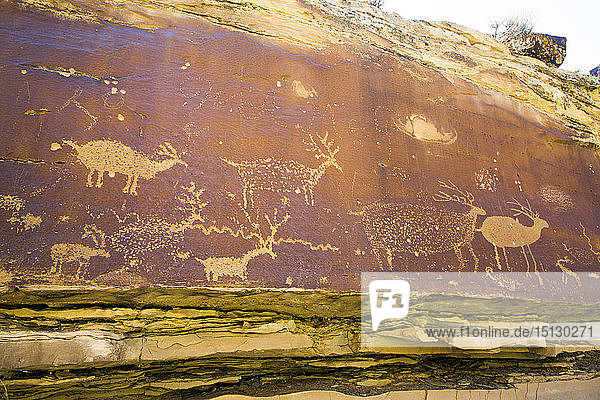 Nefertiti Petroglyphs  Gray Canyon  North of Green River  Utah  United States of America  North America