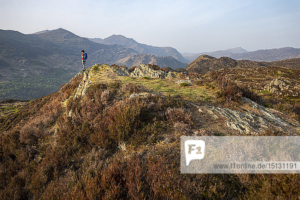 A woman trekking in Snowdonia walks across the top of Mynydd Sygun near Bedgellert with views of Mount Snowdon in the distance  Gwynedd  Wales  United Kingdom  Europe
