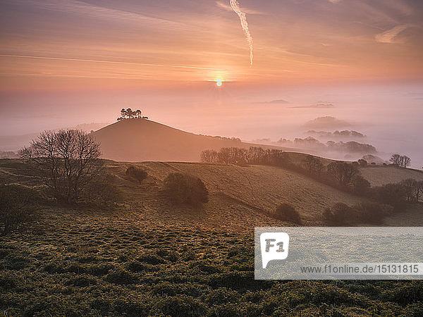 Misty sunrise over the distinctive pine topped Colmer's Hill near Bridport  Dorset  England  United Kingdom  Europe