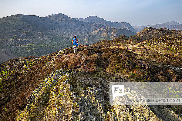 A woman trekking in Snowdonia walks across the top of Mynydd Sygun near Bedgellert with views of Mount Snowdon in the distance  Gwynedd  Wales  United Kingdom  Europe