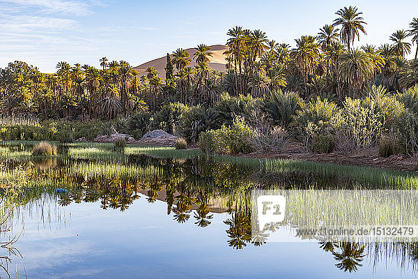 River running through the oasis of Taghit  western Algeria  North Africa  Africa
