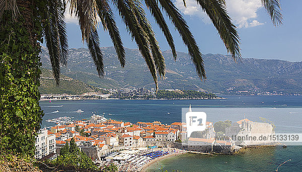 View over crowded beach to the Old Town (Stari Grad)  and Budva Bay  palm-tree in foreground  Budva  Montenegro  Europe