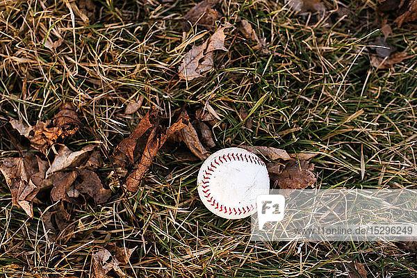 Baseballball auf feuchtem Gras mit Herbstlaub  Draufsicht