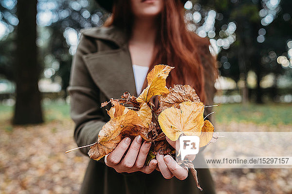 Young woman holding autumn leaves in park  close up of hands