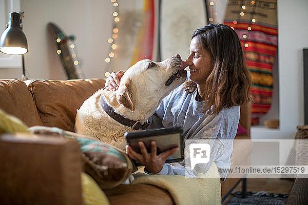 Labrador retriever licking young woman's face on living room sofa