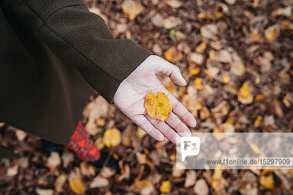 Young woman holding autumn leaf in park  overhead view of hand