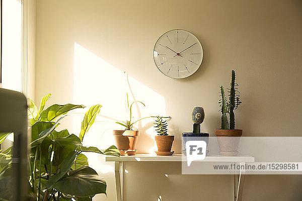Wanduhr und Topfpflanzen im Regal eines Wohnzimmers