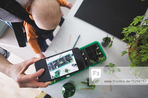 Hochwinkelansicht eines Bloggers,  der Pflanzen mit einem Smartphone fotografiert,  während er ein Mädchen in der Küche trägt