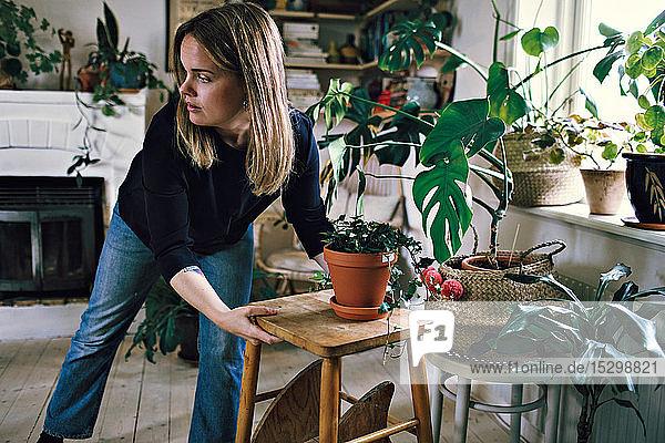 Zuversichtliche Frau positioniert Hocker und Topfpflanze im Zimmer zu Hause Zuversichtliche Frau positioniert Hocker und Topfpflanze im Zimmer zu Hause