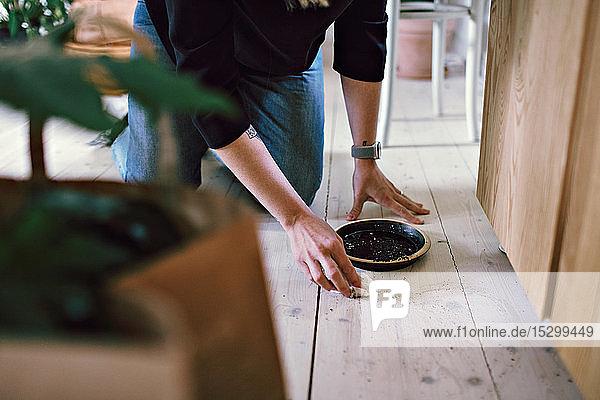 Niedrige Sektion einer Frau  die zu Hause auf einem Hartholzboden tellerweise Schmutz reinigt Niedrige Sektion einer Frau, die zu Hause auf einem Hartholzboden tellerweise Schmutz reinigt