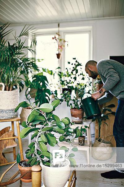 Mann gießt Pflanzen in voller Länge im Zimmer zu Hause