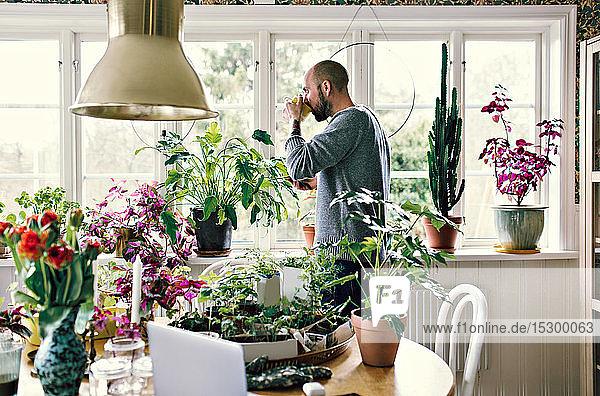 Seitenansicht eines Mannes  der Kaffee trinkt  während er zu Hause auf dem Fensterbrett neben Pflanzen steht