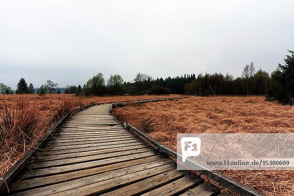 Holzweg im Moor  Hohes Venn  Deutschland  Europa