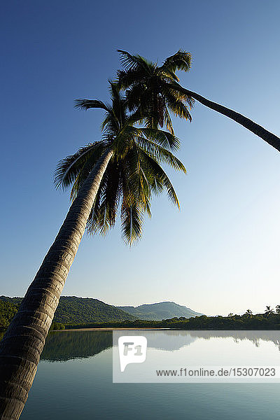 Palm trees over tranquil  idyllic sunny lake  Platinitos  Nayarit  Mexico