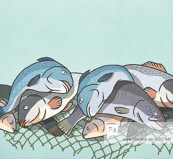 Dead fish caught in netting
