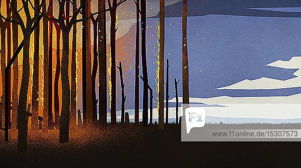 Waldbrand mit brennenden Bäumen in der Nacht