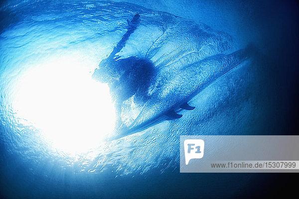 Underwater view sunshine over surfer