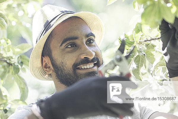 Porträt eines bärtigen jungen Mannes beim Beschneiden von Baumzweigen