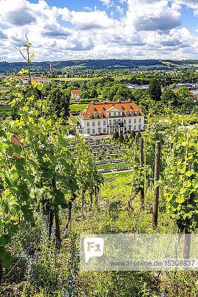 Deutschland  Radebeul  Blick auf Weinberg und Schloss Wackerbarth